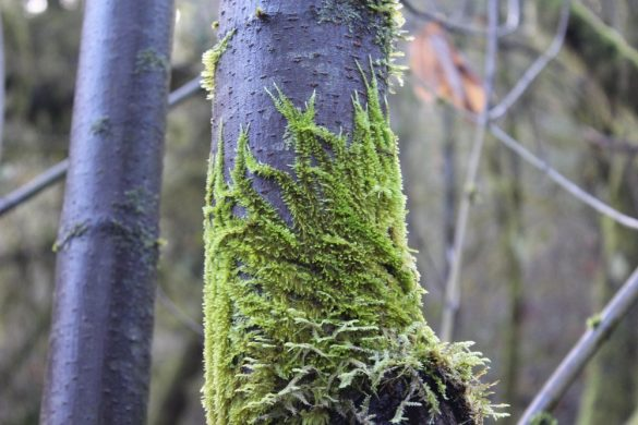 Hiking the new Thurston Hills Natural Area – Springfield, Oregon
