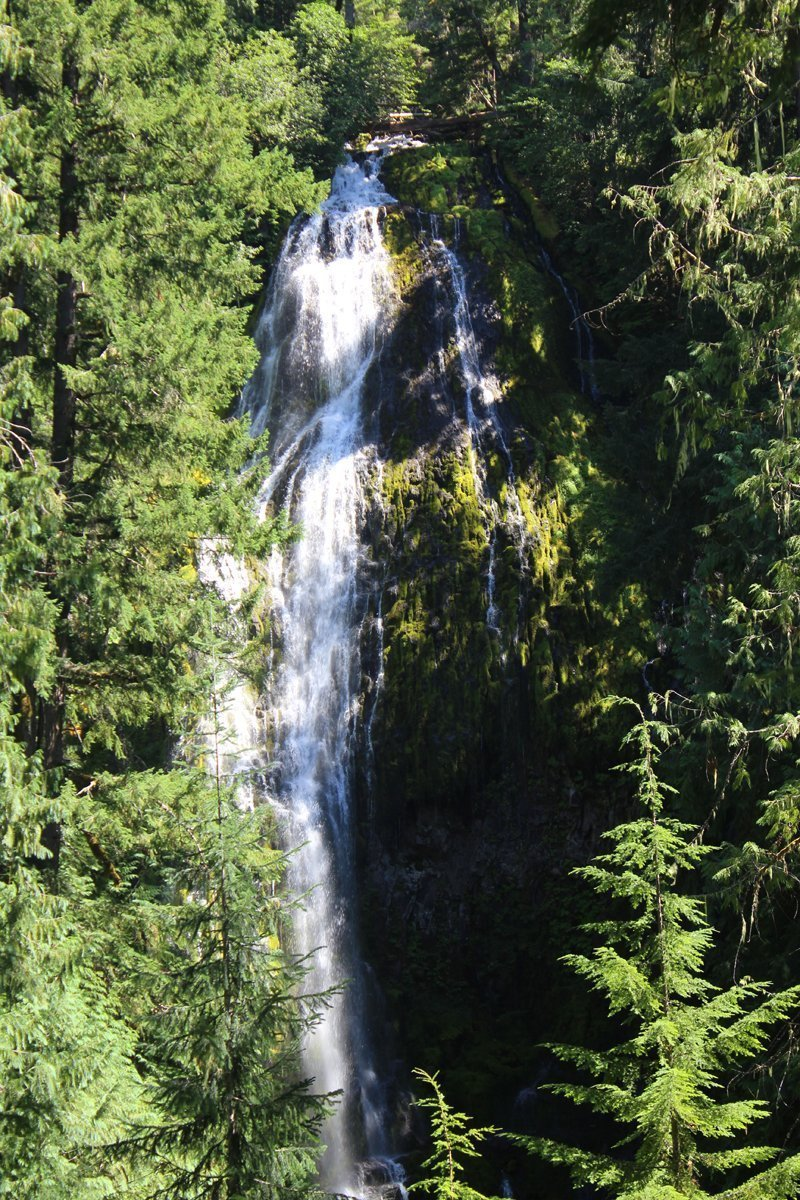 Lower Proxy Falls in Willamette National Forest