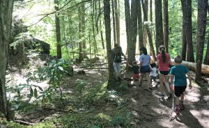 The trail at the start of Proxy Falls is easy and wide, with large Douglas fir trees overhead
