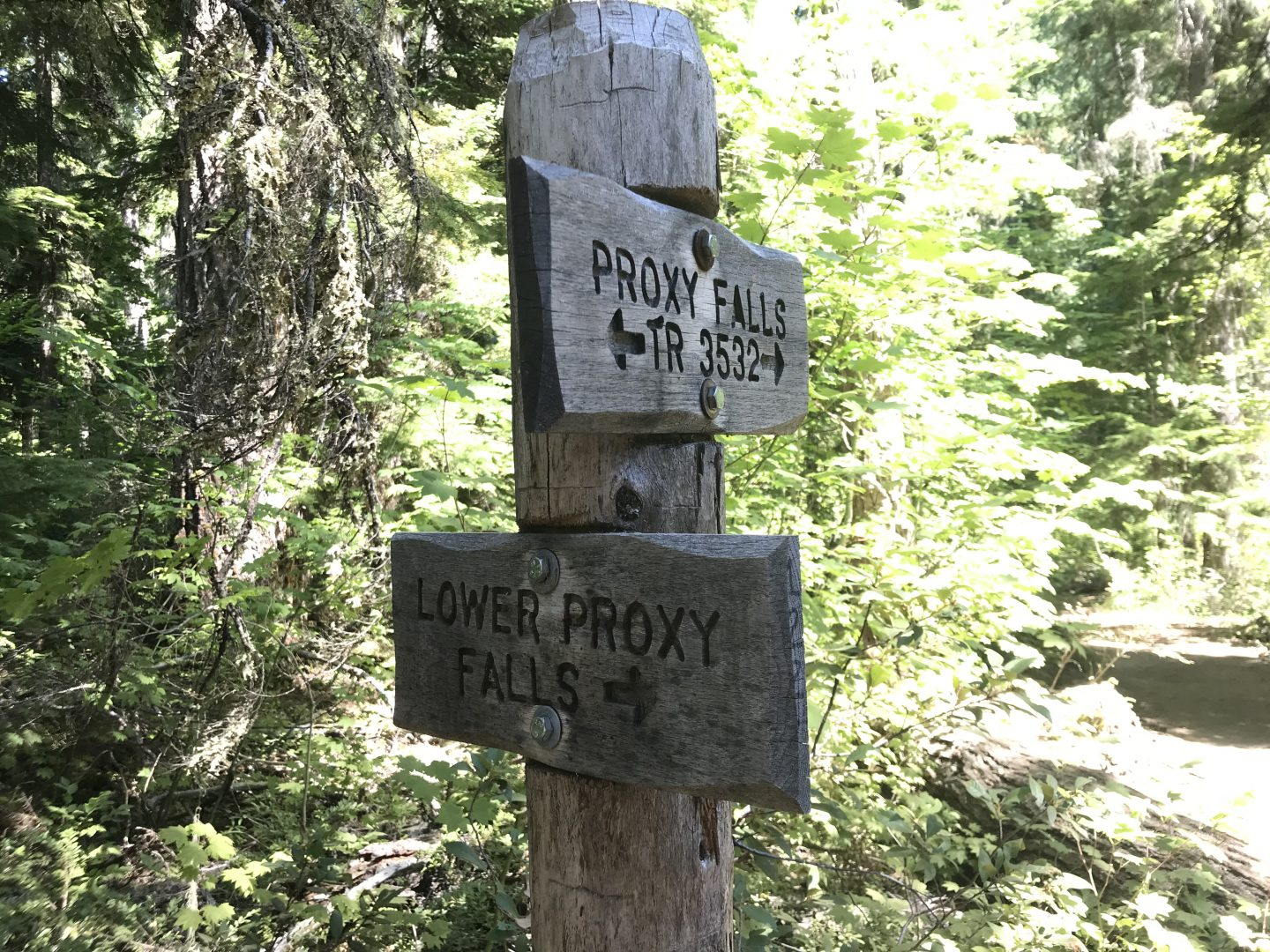Sign at trail junction on Proxy Falls trail