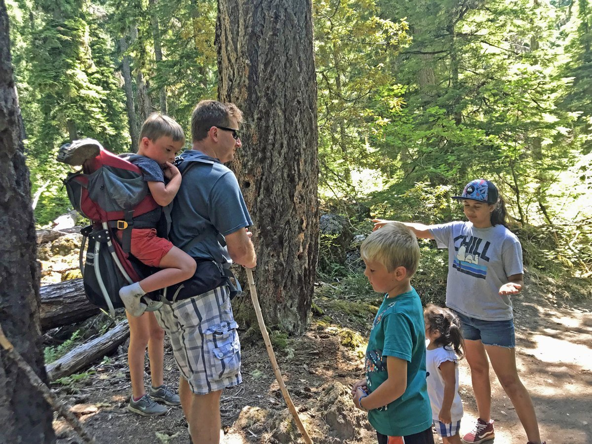 Teaching forestry to children