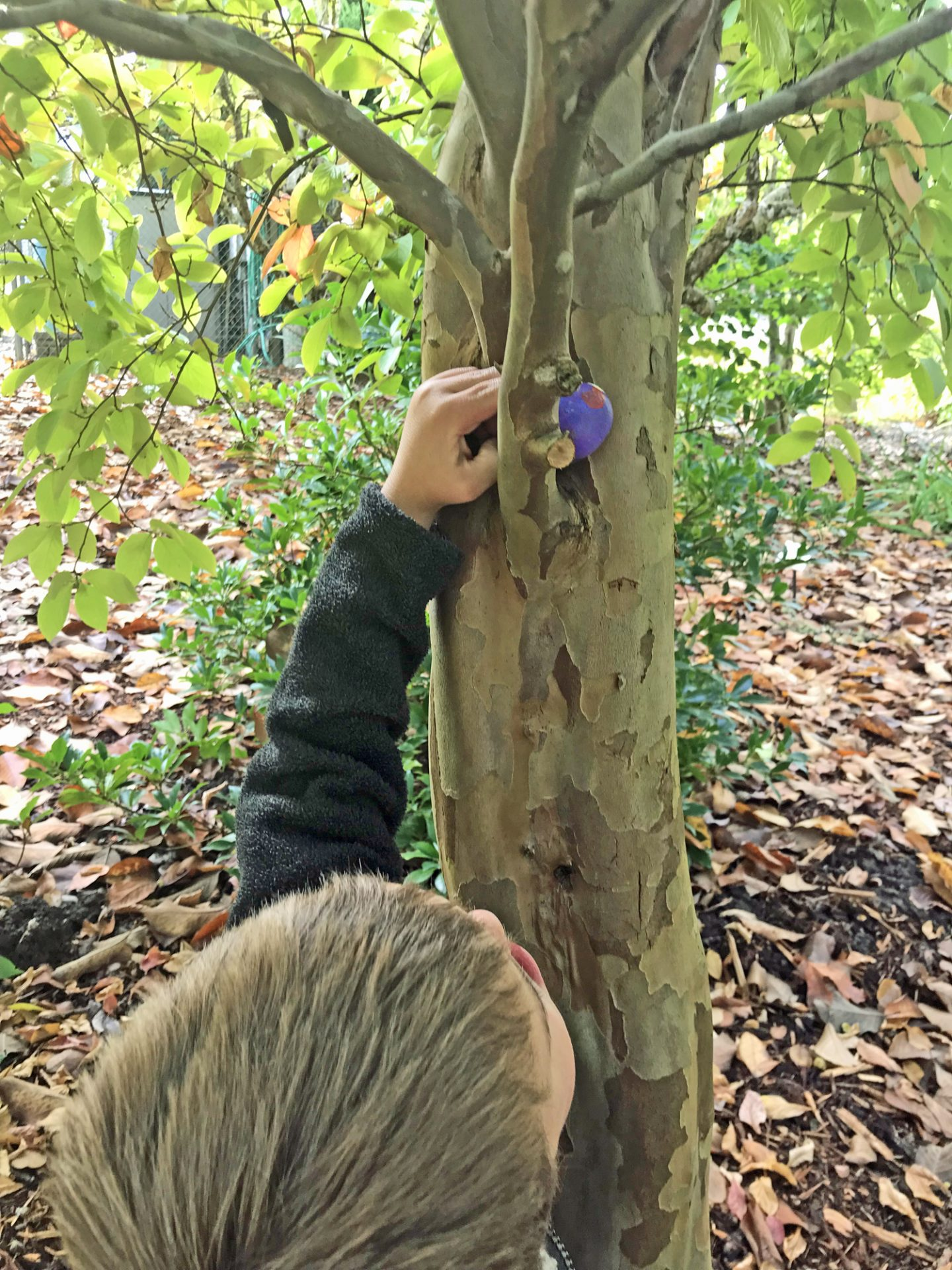 Our 5 year old hides a painted rock in a tree