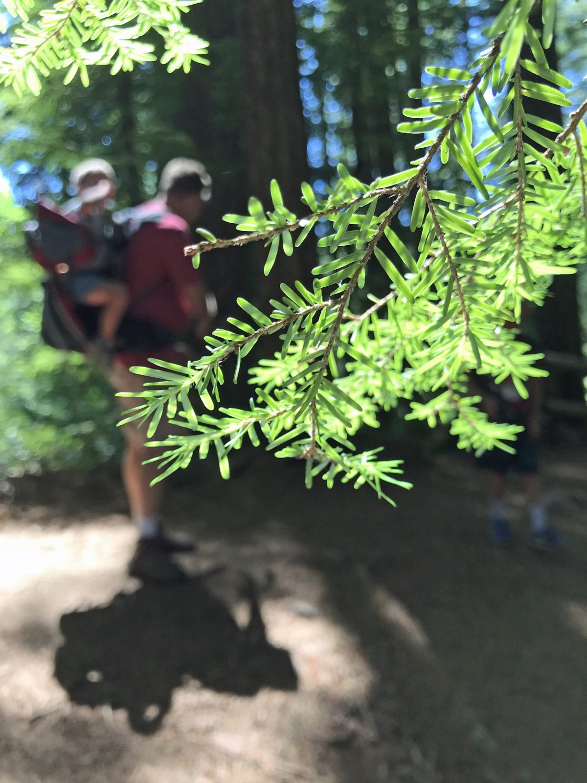 Man using Deuter Kid Comfort to carry an older child with special needs on a hike