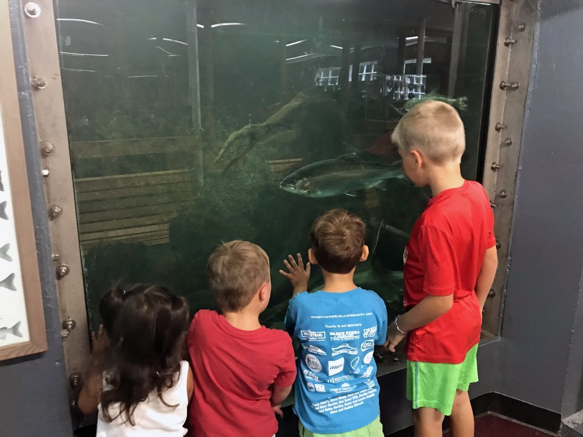 Live fish exhibit at fish hatcheries near eugene - Willamette Fish Hatchery