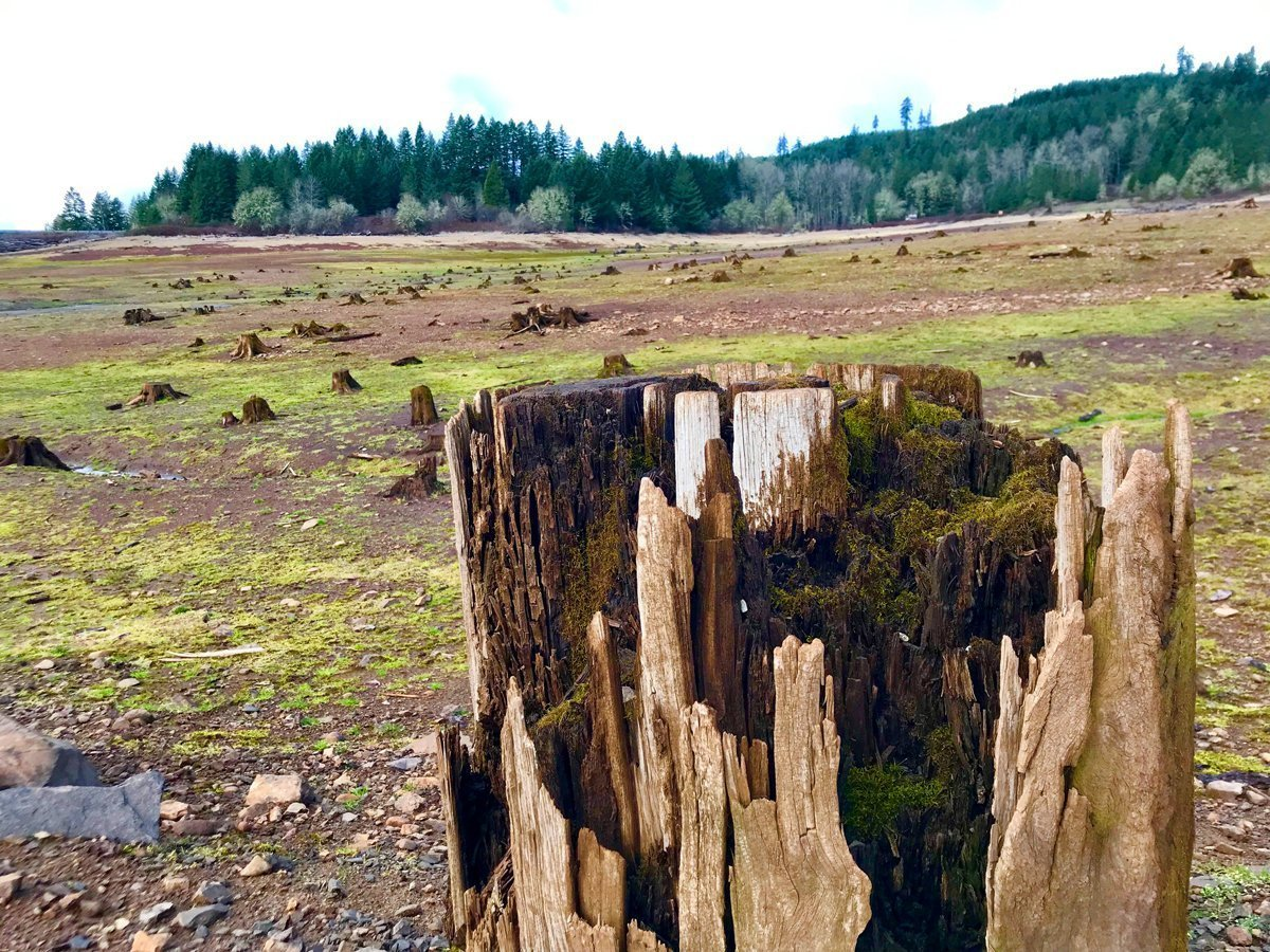 Underwater stumps at Fall Creek Reservoir - hike near eugene with kids
