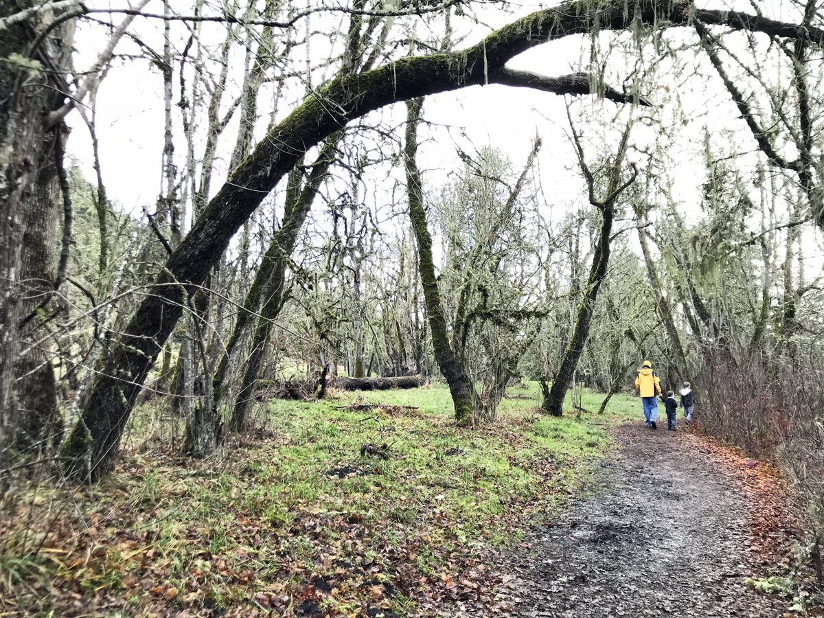 Path through Mt Pisgah Arboretum near Eugene