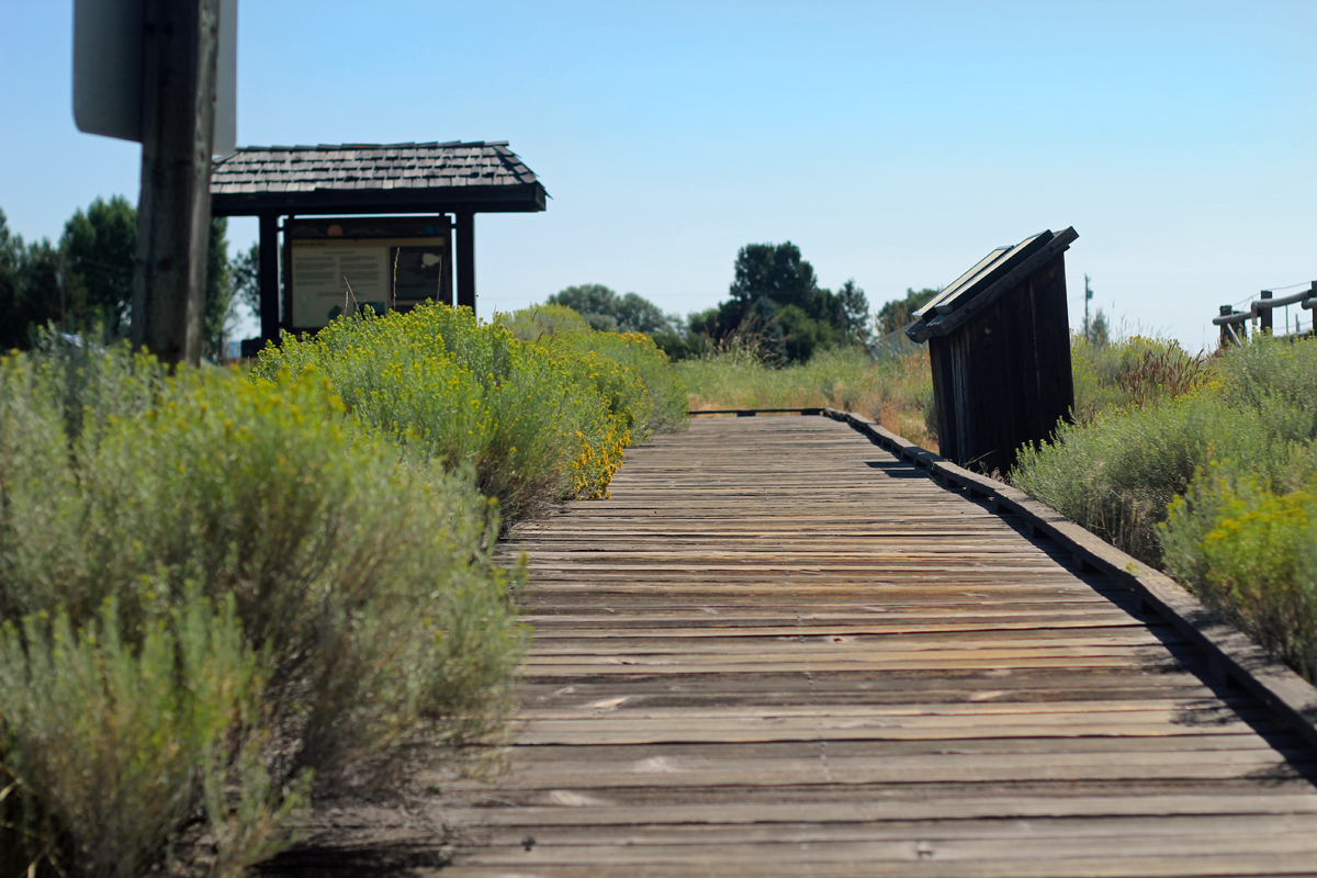 The boardwalk at the entrance of the Homestead Village Museum in Fort Rock. Green plants line the path, and an interpretive sign welcomes visitors.