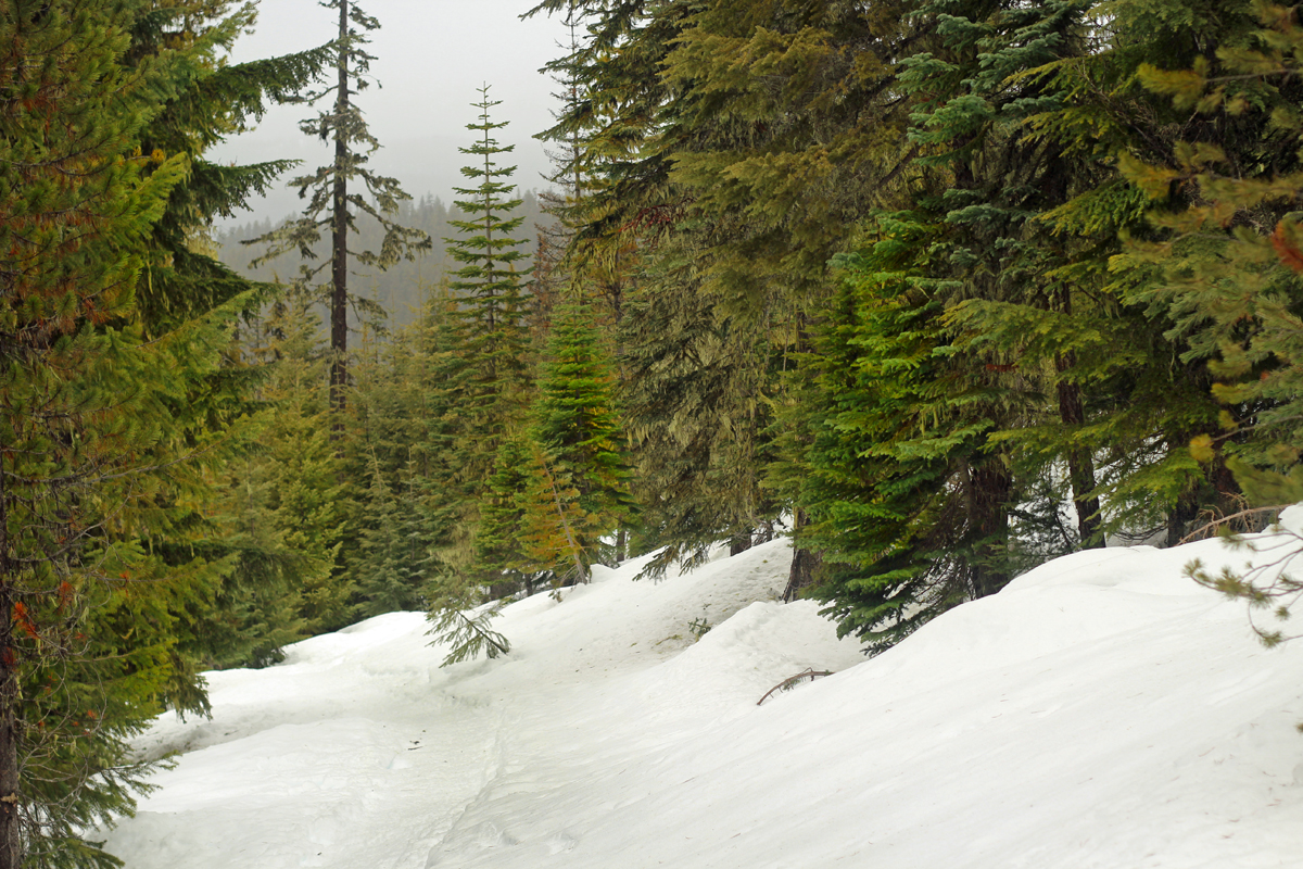 Snowshoe trail to Odell Lake