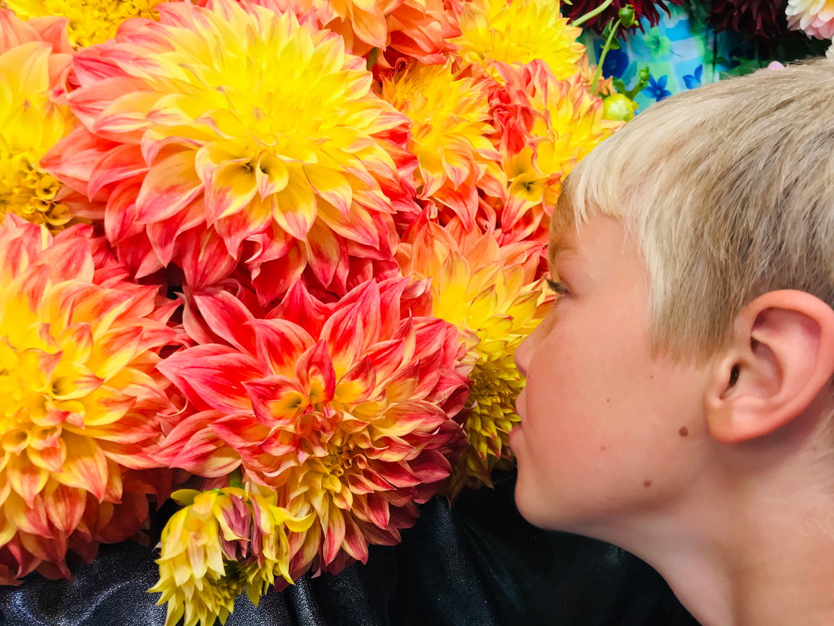 Visit Swan Island Dahlias with your kids! Flower farms in Oregon