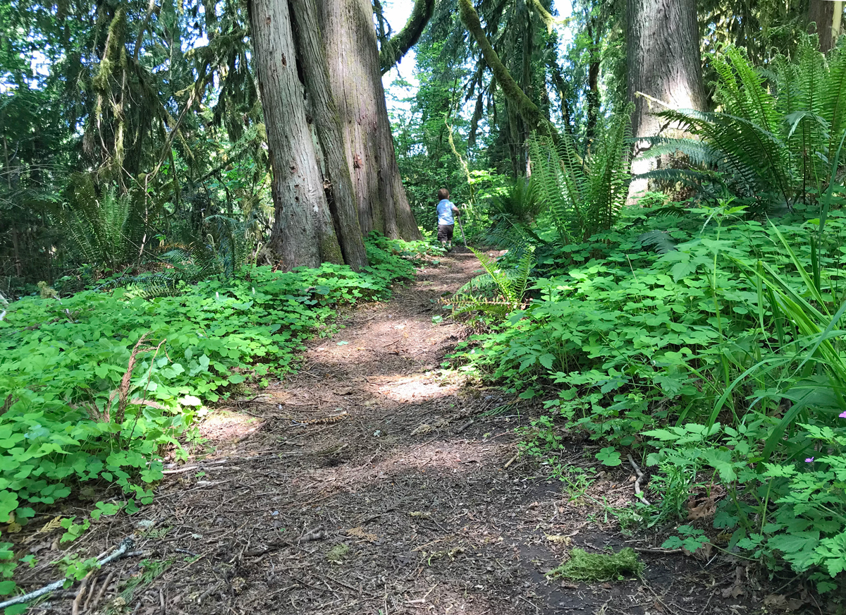 Hiking trail at Deerhorn County Park - quarantine hikes near eugene