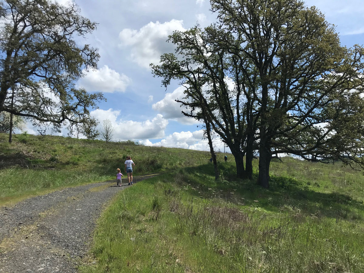 Thurston Hills Trail in Springfield - quarantine hikes near eugene