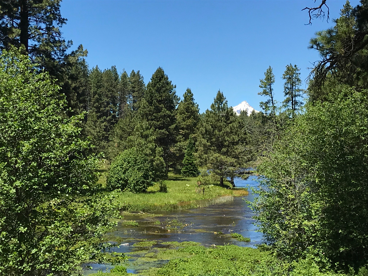 Headwaters of the Metolius River