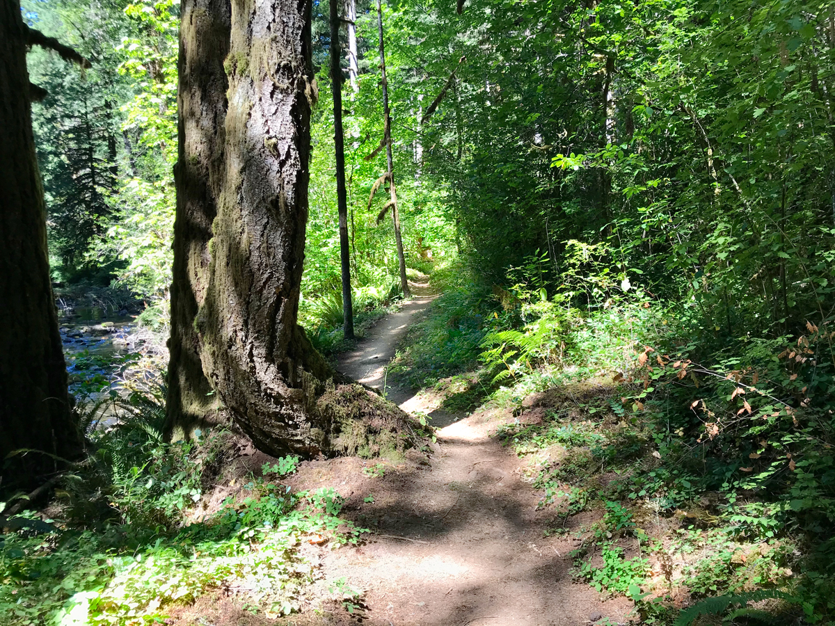 Hiking trail at Shotgun Creek