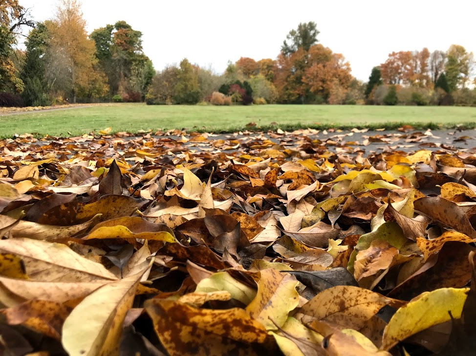 Autumn in Wallace Ruff Magnolia Park in Springfield