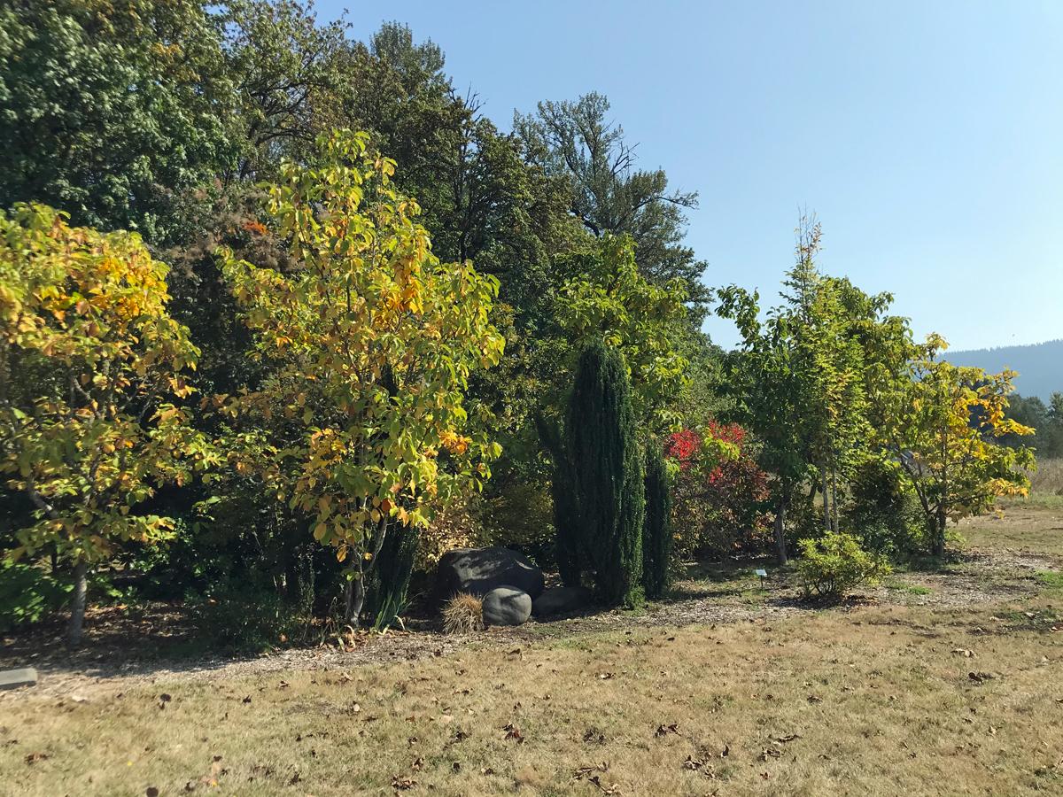 Summer in magnolia ruff park